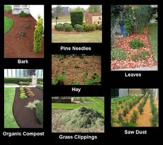 Best Type Of Mulch For Vegetable Garden - what is the difference between mulch compost and bark
