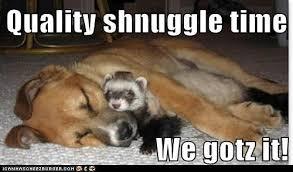 Snuggle Meme - meme ferrets has a hotdog snuggle loldogs n cute puppies