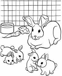 breeding pet rabbit coloring coloring sky
