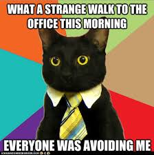 Memes Scared - friday the 13th is not a good day for business cat i can has