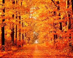 autumn pumpkin wallpaper widescreen forest autumn scene forest path tree premade wallpapers for hd 16