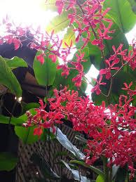 hanging gardens bali hb idolza