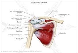 Human Shoulder Diagram Topic Shoulder Archives Human Anatomy Educations