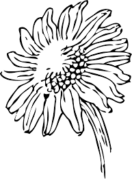 Design Black And White Sunflower Design Black And White Clipart