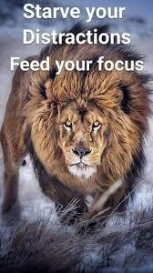 25 lion quotes ideas lions win