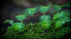 green leaves water drop hd wallpapers desktop images full