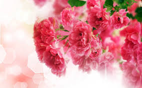 Cute Pink Pictures by Cute Pink Carnations Flowers Wallpaper 1612 Wallpaper Themes