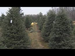 christmas tree prices christmas tree shortage could drive up prices