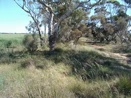 native plants south australia south australia emr project summaries