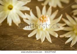 bullet flowers bullet wood flower stock images royalty free images vectors