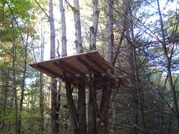 tree platform mike meo design