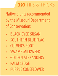 plants native to missouri native gardening city of blue springs mo official website
