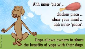 australian shepherd yoga video doga a totally out of the box idea of practicing yoga with your dog