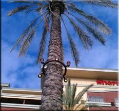 outdoor tree lighting landscape lights palm tree light ring