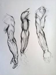 112 best anatomy study arms images on pinterest anatomy study