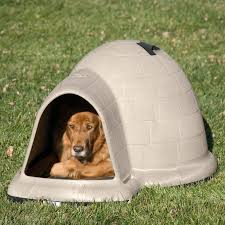 Small House Dogs Decorating Igloo Dog House With Wooden Floor And White Wall