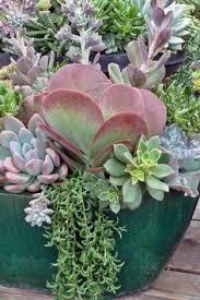 resume modernos terrarios suculentas succulent arrangement artificial succulent by lovejoysucculents