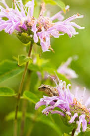 Identify Flowers - 24 best flowers to identify images on pinterest wisconsin