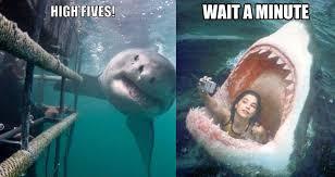 Shark Meme - hilarious shark memes on instagram vix