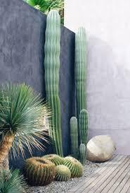 atrévete con los cactus 15 inspiradoras decoraciones para patios