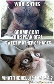 Grumpy Cat Coma Meme - page 2 of 5 for best grumpy cat memes