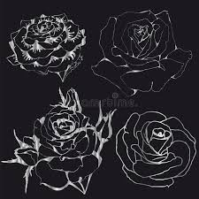 silver roses contours silver roses on a black background stock vector image