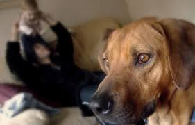 comment empecher mon chien de monter sur le canapé les signes de douleur chez le chien comment savoir si mon chien