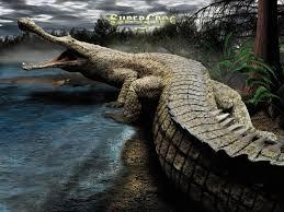 alligator wallpaper hd