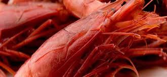 come cucinare i gamberoni congelati allarme alimentare in italia presenza di solfiti nei gamberi