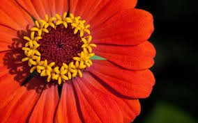 Autumn Flower Flowers Autumn Flower Earth Orange Fall Red Yellow Full Hd