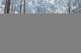 wallpaper forest snow winter germany pattern curtain