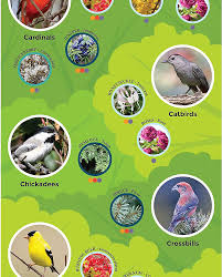 using plants to attract birds to your garden