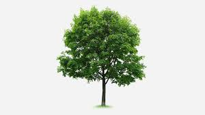 a tree grows in funds does the name define the product