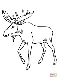 bull moose coloring page free printable coloring pages