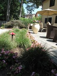growing ornamental grasses learn more about ornamental grass in