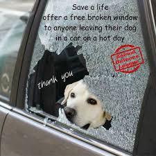 Dog In Car Meme - 36 best summer dog days hot car images on pinterest summer dog