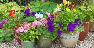 boost your garden with these 8 fall planting ideas hometalk