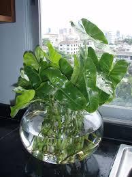 40 best indoor plants images on indoor plants gardens