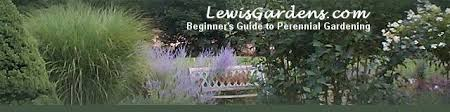 perennial flower gardening for beginners perennial plant care and