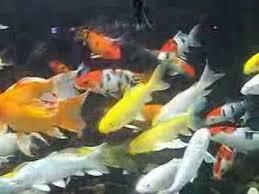 pet supplies aquarium and fish for sale in sri lanka