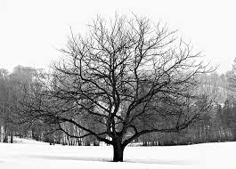 apple tree in winter photograph by elisseeva