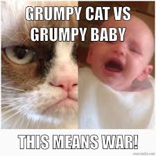 This Means War Meme - grumpy cat vs grumpy baby this means war grumpy cat pinterest