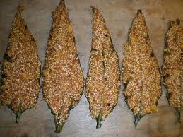 cuisine sauvage recettes cuisine sauvage tuiles de consoude