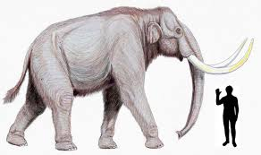 ice age extinctions large mammals linked humans