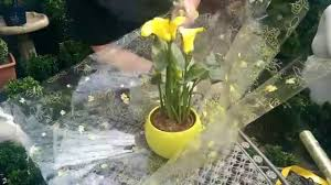 how to gift wrap a plant with jeannine at bents garden u0026 home