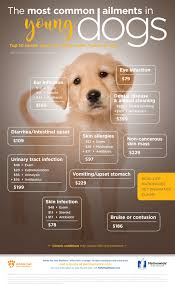 most common ailments in young dogs