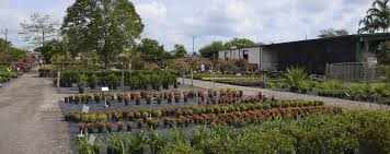 native florida plants for home landscapes nu turf of pompano beach landscape nursery plant tree u0026 garden
