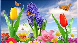 Nice Flower Picture - download nice flower wallpapers for pc