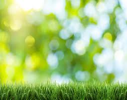 a guide to lawn care service prices in san antonio in 2015