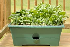 Fall Vegetable Garden Plants by Apartment Vegetable Garden Apartment Vegetable Garden Ideas